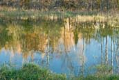 Reflecting Pond in the Fall in Maine
